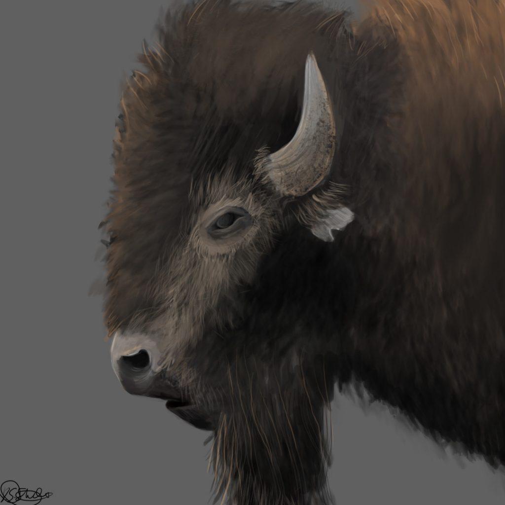 danyon-street-bison